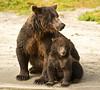 Sow & Young Cub - Coastal Brown Bear<br /> Kuliak Bay<br /> Katmai National Park, Alaska<br /> © 2012