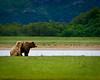 A Place Like No Other<br /> Coastal Brown Bears<br /> Katmai National Park, Alaska<br /> © 2011