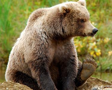 Katmai National Park & Preserve, Alaska © 2008