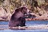 Coastal Brown Bear Relaxing<br /> Katmai National Park & Preserve<br /> Alaska<br /> © 2009