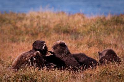 Katmai National Park & Preserve Alaska © 2009