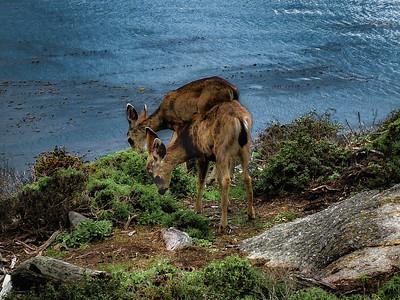 Baby Deer on Cyprus Grove path