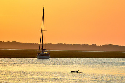 A dolphin swims past a sailboat in the Intracoastal Waterway off St. Simons Island