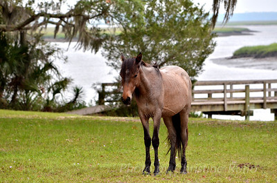 Cumberland Island National Seashore, Georgia