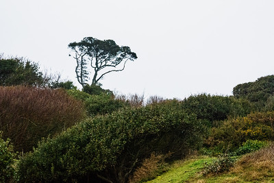 JW2_5375_coastal-tree
