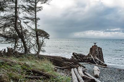 JW2_3193_vanc-island-coastline