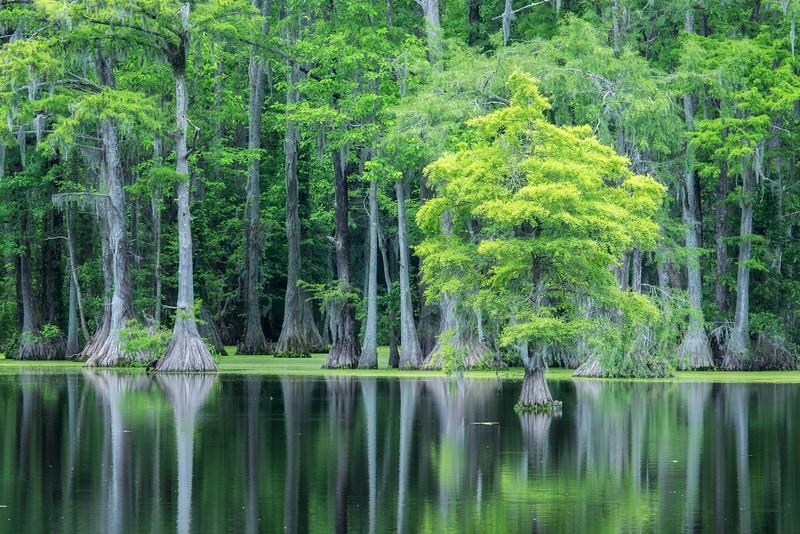 Crpress Swamp