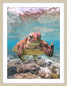 Coastal Prints - Terry the Turtle
