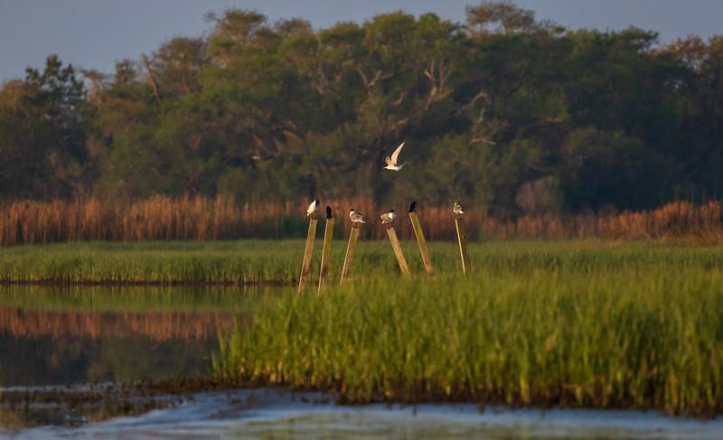 Marsh life at Bear Island
