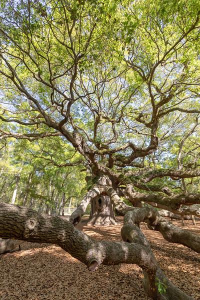 Angel Tree on St John's Island