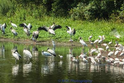 Coastal birds Georgia