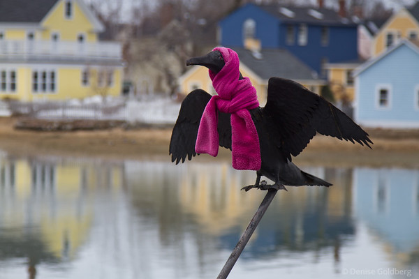 sculpture of a bird, dressed in a bright pink scarf