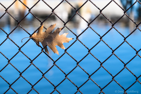 a leaf caught in the grid of a fence