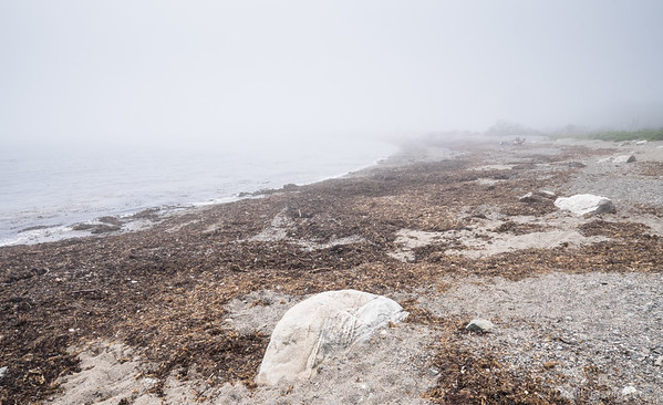 in the fog, Odiorne Point State Park
