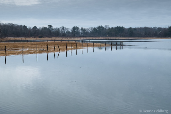fence posts in the water