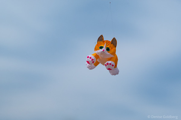 kite in the shape of a kitten