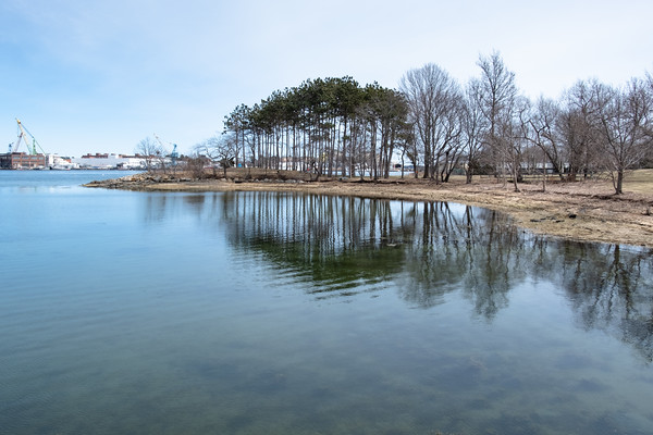 trees on Peirce Island, reflecting in the Piscataqua River