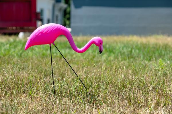 pink flamingo, lawn art