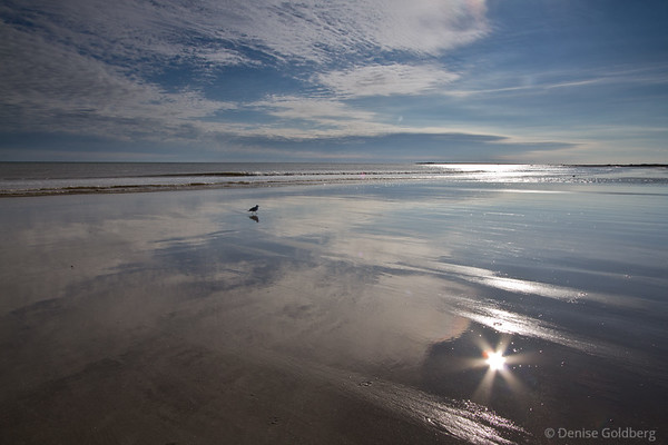sea gull walking, reflections, sun star