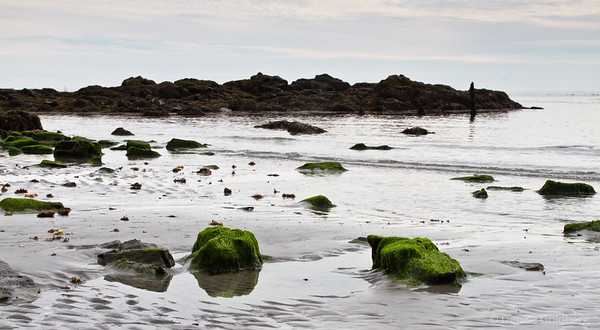 bright green seaweed-covered rocks