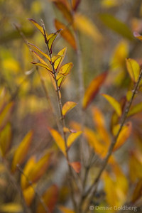 magic, leaves against leaves