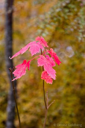 a few bright leaves