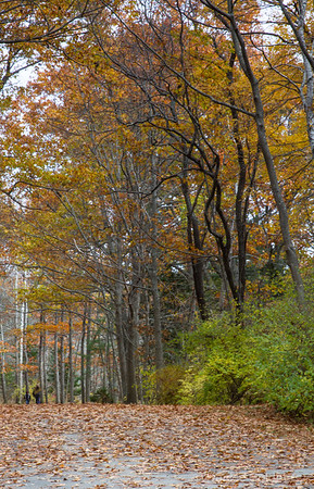trees wearing late autumn leaves