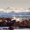 Resting harbor seals