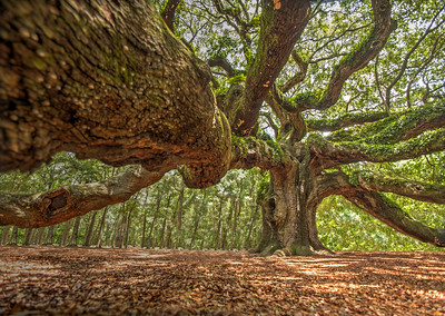 angel_oak-4799