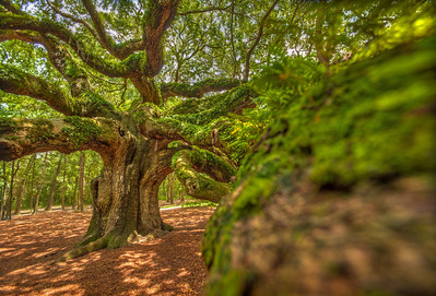 angel_oak-4790