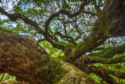 angel_oak-4833b
