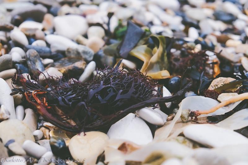 Seaweed one
