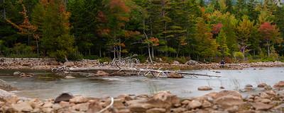 Driftwood in Jordan Pond