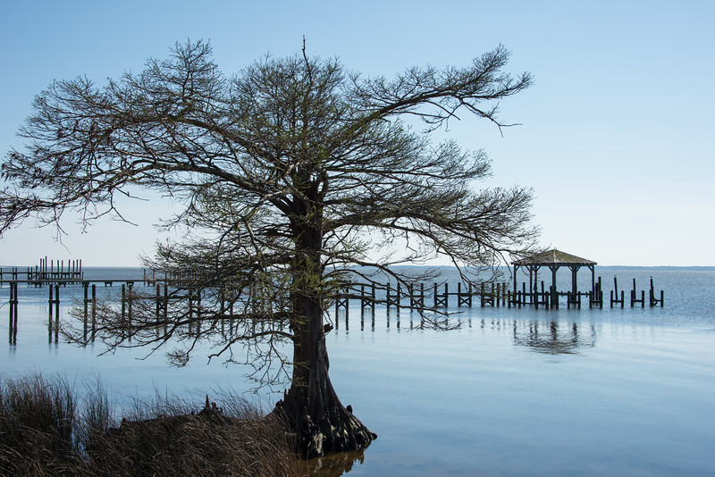 Tree at Water's Edge