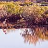 Blue Heron Crystal Springs Florida