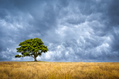 Lone Tree in the Storm