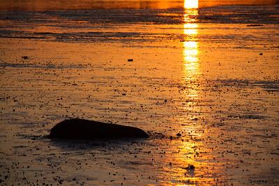 Clam Flats At Sunrise