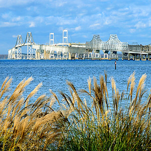 Chesapeake Bay Bridge With Golden Grasses