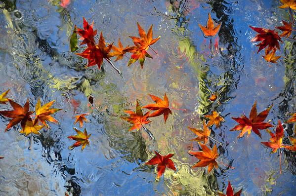 Leaves on Hanken