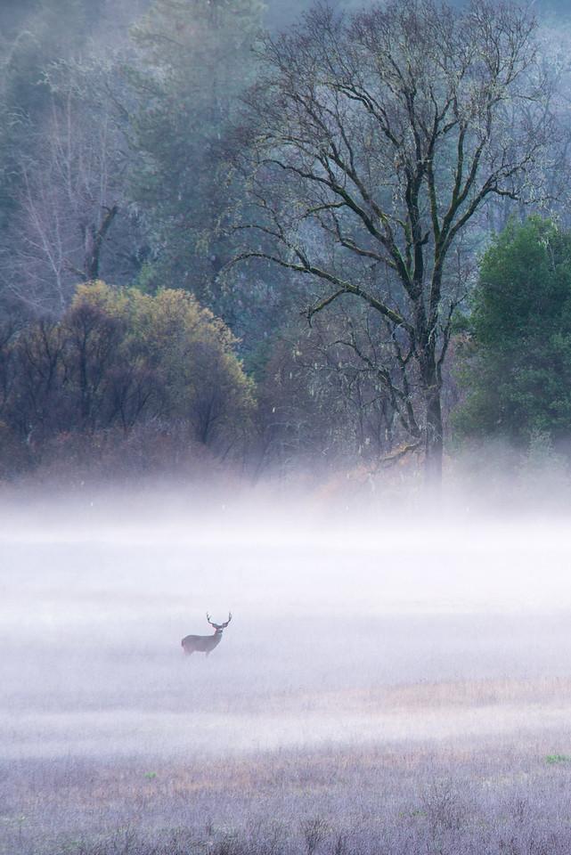 King of the Fog, California