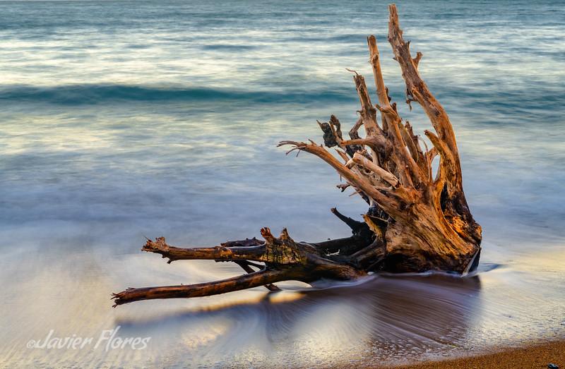 Kirby Cove Beach Driftwood