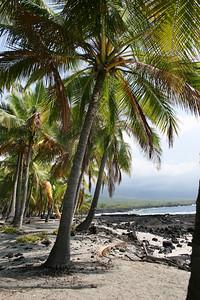 Palms 02