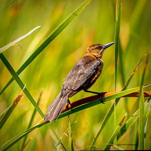 Hale_Sally_Mystery_Bird