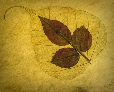 1-31-Lacy-Leaves