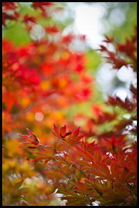 Mark Chandler - fall color 4