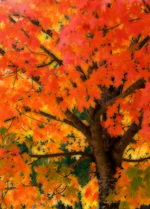 Mark Chandler - fall color
