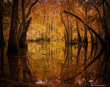 Cypress Grove 11 01 20
