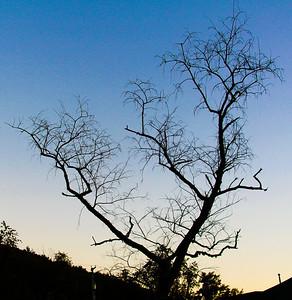 T Burr - Dead Tree