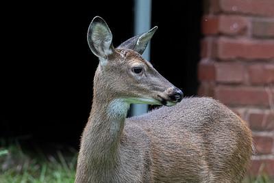 Rob Hale - Hiram Deer 092920