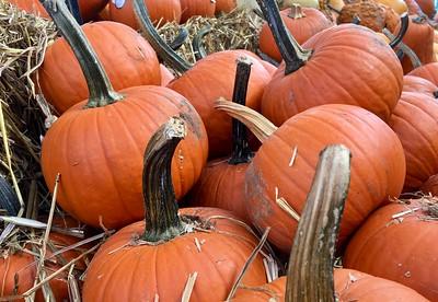 Pumpkins For Sale, MBuckert